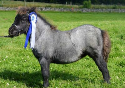 Foal pictures 16th August 2015 012